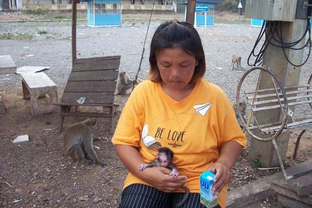 Padtama Kedkuerviriyanon feeds the baby female monkey she saved after the mother was killed by a visitor's car at  Wat Khao No in Nakhon Sawan's Banphot Phisai district last Friday. (Photo by Chalit Phumruang)