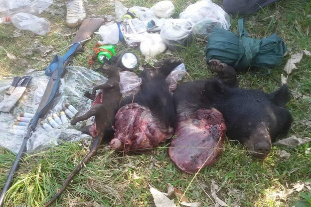 The head, paws and meat of a black bear, a dead civet, and shotgun and ammunition seized from suspected poacher Somjit Boonkong, 52. (Photo by Chaiwat Satyaem)