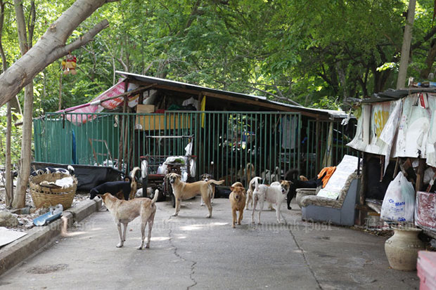 More than 100 dogs were found at a makeshift shelter in Bangkok's Lak Si district in March following complaints about loud noise and bad smells. Dogs and cats should be vaccinated against rabies, a viral disease that has already claimed eight human lives in Thailand this year.  (Photo by Pattarapong Chatpattarasill)
