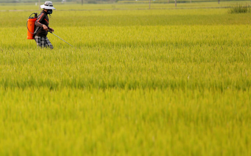 A farmer works on a rice paddy field in Quang Ngai province, Vietnam, on March 14, 2018. (Reuters photo)