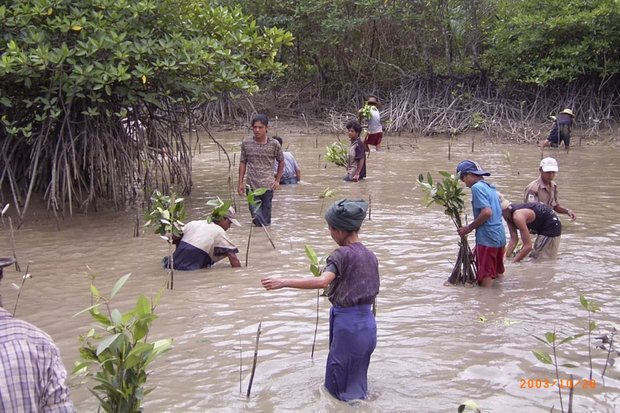 Myanmar-replant