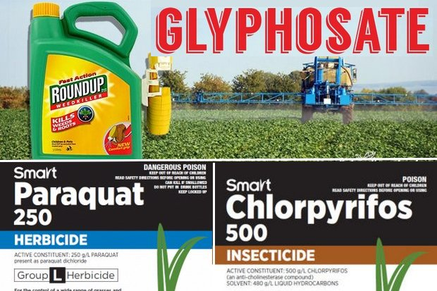 All three of these farm chemicals have been banned by some countries, but are allowed by others, including Thailand.