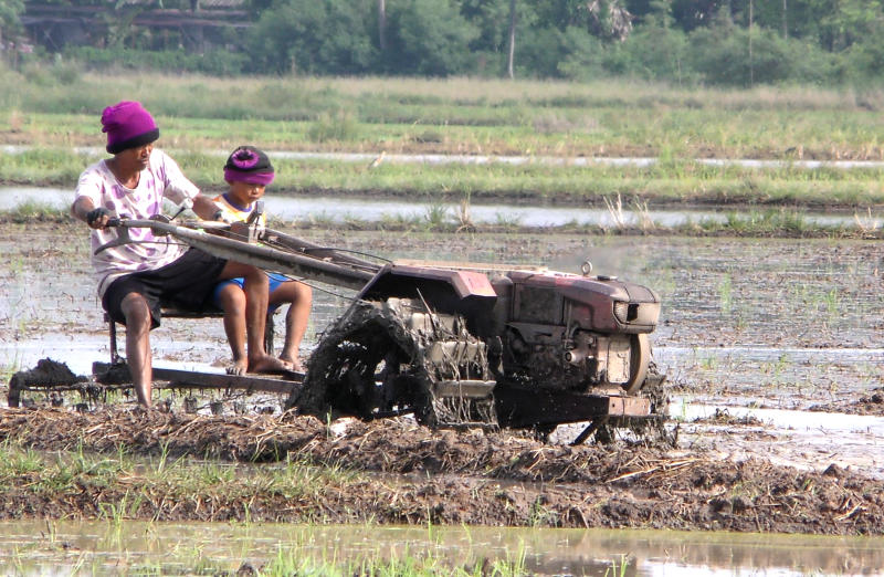 The Thai Rice Exporters Association worry that higher prices of hom mali fragrant rice may lure farmers to grow more of it.