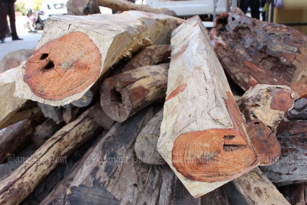 Until now, all cutting and selling of phayung (Siamese rosewood, above) and three other protected woods has been banned, no matter where they were grown. (Post Today file photo)