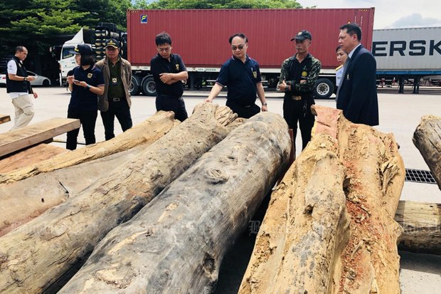 Illegal logging like this case of timber smuggling busted in June at Laem Chabang port, combined with wildlife poaching, have caused damages estimated at more than 100 billion baht since the military seized power. (Post Today file photo)