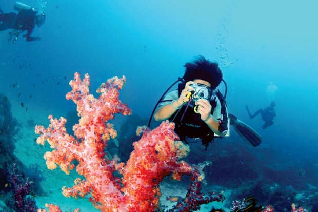To get a photograph of a coral reef off the Similan Islands like this tourist of the past, now requires a lot of hassle. (File photo provided)