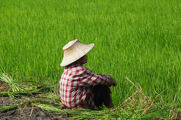 DESPAIR: A rice farmer in Ayutthaya's Bang Sai district takes a break from her routine work in the fields. Like most other farmers, she is in a financial predicament due to farm debts. (Photo by Pattanapong Hirunard)