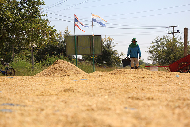 A farmer in Muang district in Chayaphum province dries his rice outdoor to reduce moisture. (Photo by Makkawan Wannakul)