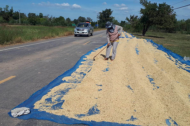 A farmer continues to dry paddy on Road 3047 in Lam Plai Mat district of Buri Ram province after a fatal accident on Nov 10. (Photo by Surachai Piraksa)