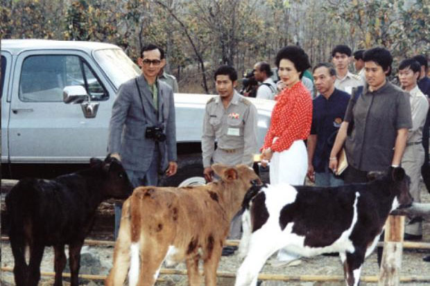 King Bhumibol Adulyadej, accompanied by Her Majesty Queen Sirikit and HRH Princess Maha Chakri Sirindhorn, inspected a cattle-raising project at Huai Hong Khrai. The King told the local press that rural-development efforts must respect geographical and cultural diversity. Royal Household Bureau