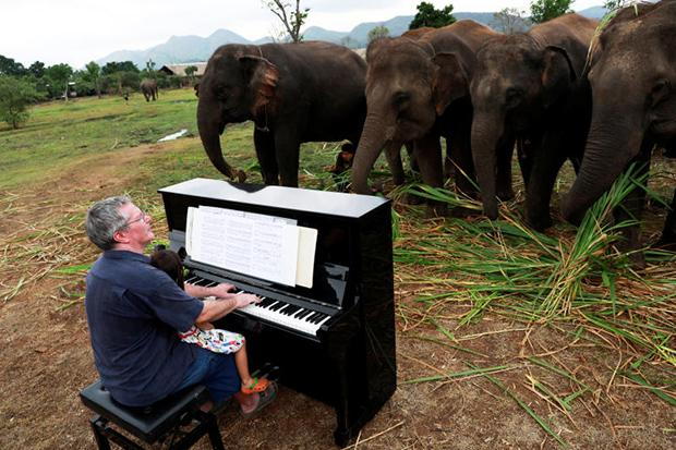 Classical piano soothes old elephants at sanctuary