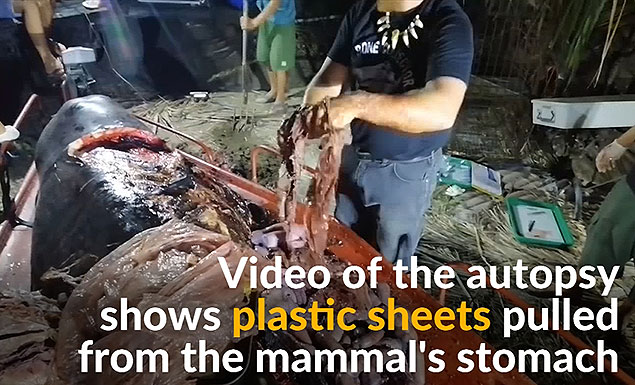 Whale found dead with 88 pounds of plastic in its stomach