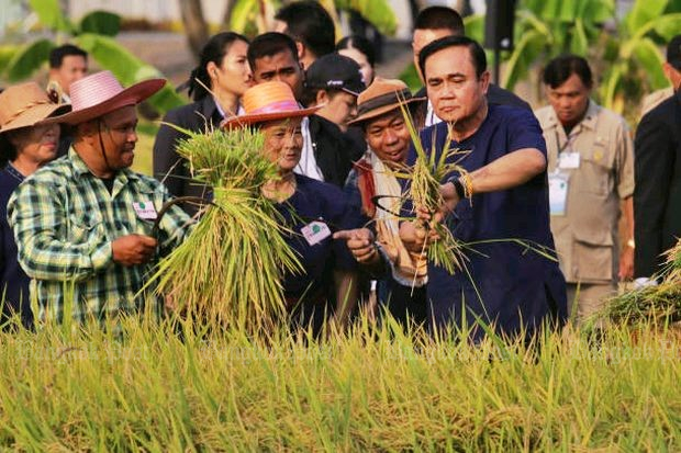 Prime Minister Prayut Chan-o-cha instructs two farmers (left) on the correct use of a sickle to harvest rice, as the director of an agricultural learning centre in Bangkok's eastern Nong Chok district peers over his shoulder during a photo op on Wednesday. (Photo by Wichan Charoenkiatpakul)