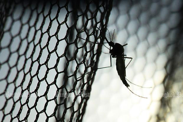 Chikungunya disease is transmitted from human to human by the bites of infected female Aedes aegyptiandAedes albopictus mosquitoes. (Bangkok Post file photo)