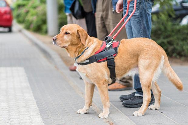 Dogs' purpose