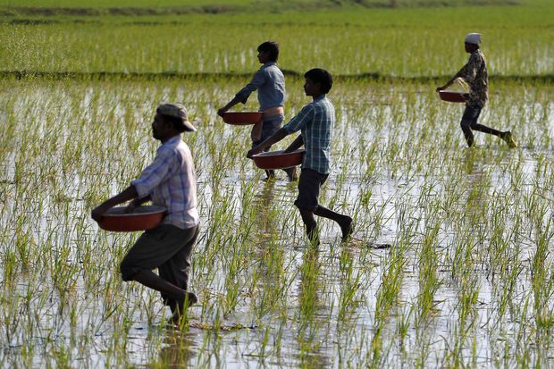 India considering replacing farm subsidies with cash