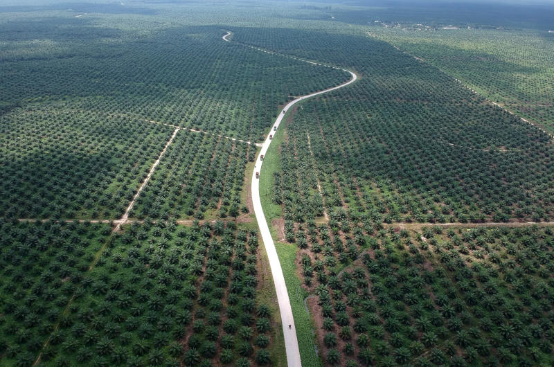 to challenge eu directive on palm oil