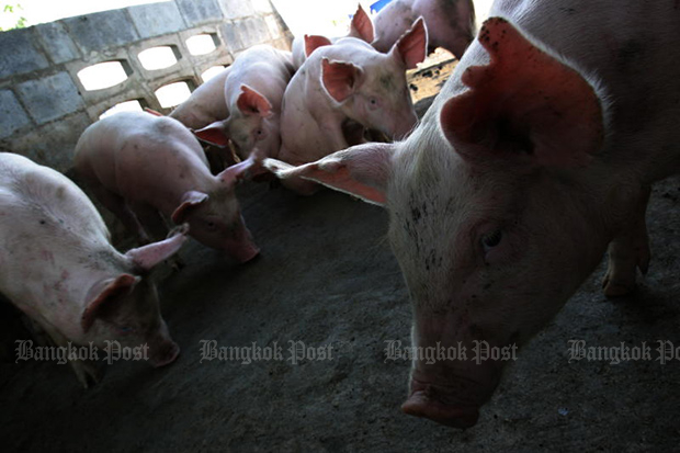 Vietnam has confirmed the first African swine fever cases in three provinces. (Bangkok Post photo)