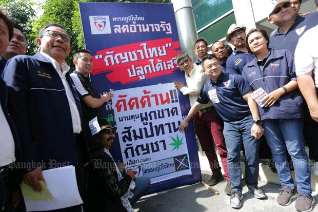 Bhumjaithai Party members on Monday doubled down on their campaign to legalise unlimited marijuana cultivation and prevent a monopoly on the trade. The relaunch was held at party headquarters in Bangkok. (Photo by Wichan Charoenkiatpakul)