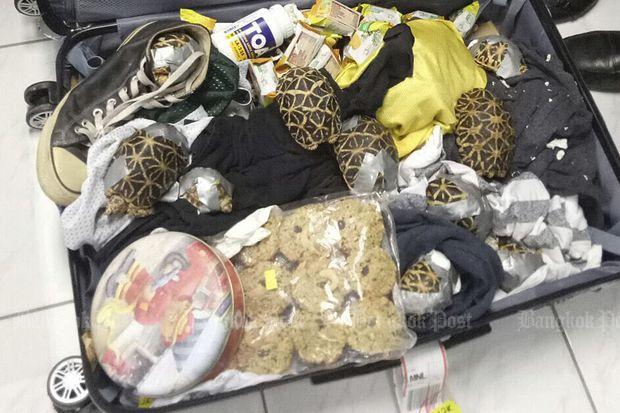 Over 1,500 turtles found inside luggage in Philippines
