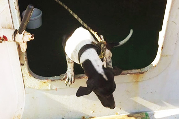 Outrage over dog euthanised after reaching Hong Kong on Thai cargo vessel