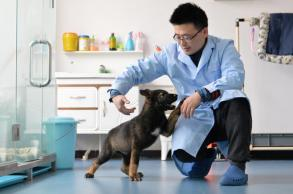 China's first cloned police dog reports for duty