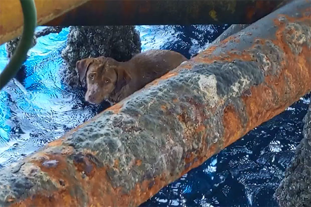 Oil rig workers save tired dog found swimming off coast of Thailand