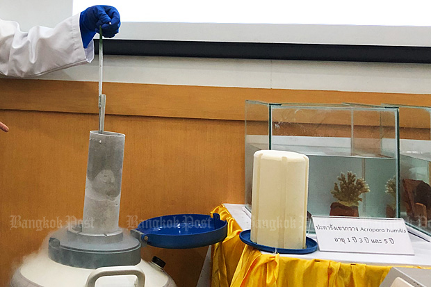 Chulalongkorn marine scientists on Wednesday show off the cryopreservation technique.(Photo by Arusa Pisuthipan)