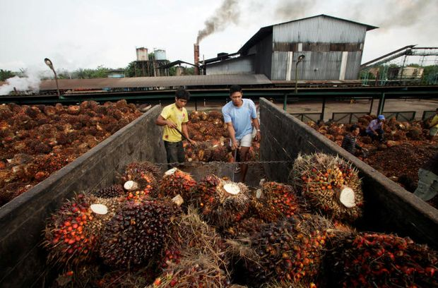 FILE PHOTO: Workers unload oil palm fruits in a state-owned crude palm oil processing unit in North Sumatra May 29, 2012. (Reuters)