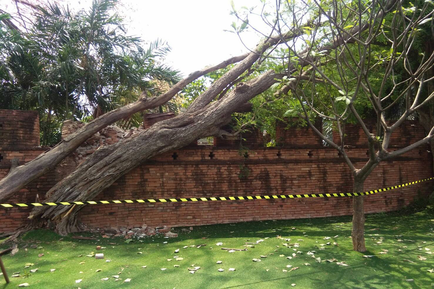 The area around the ancient wall in the Kanchanaburi municipality is taped off where a tamarind tree fell on it on Sunday. (Photo by Piyaratch Chongcharoen)