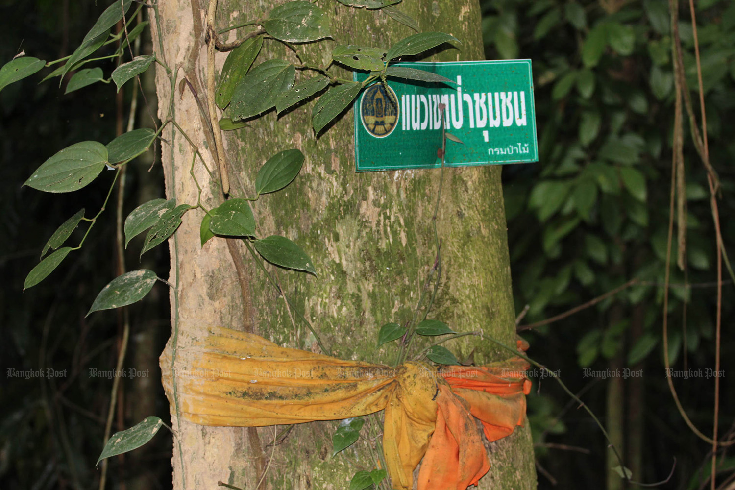 A sign reading community forest is posted the National Park, Wildlife and Plant Conservation Department in Tha Sae district of Chumphon. (Bangkok Post file photo)