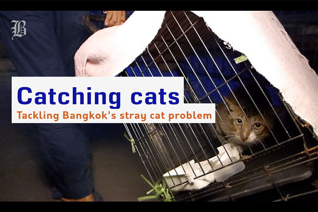 VIDEO: Catching cats