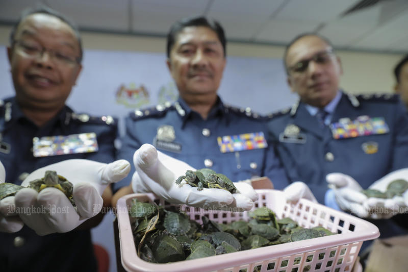More than 5000 turtles seized in luggage at Malaysia airport