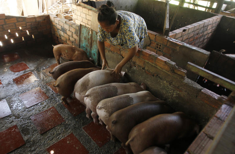 Philippines Bans Pig Imports From Laos Due To Swine Fever Wto