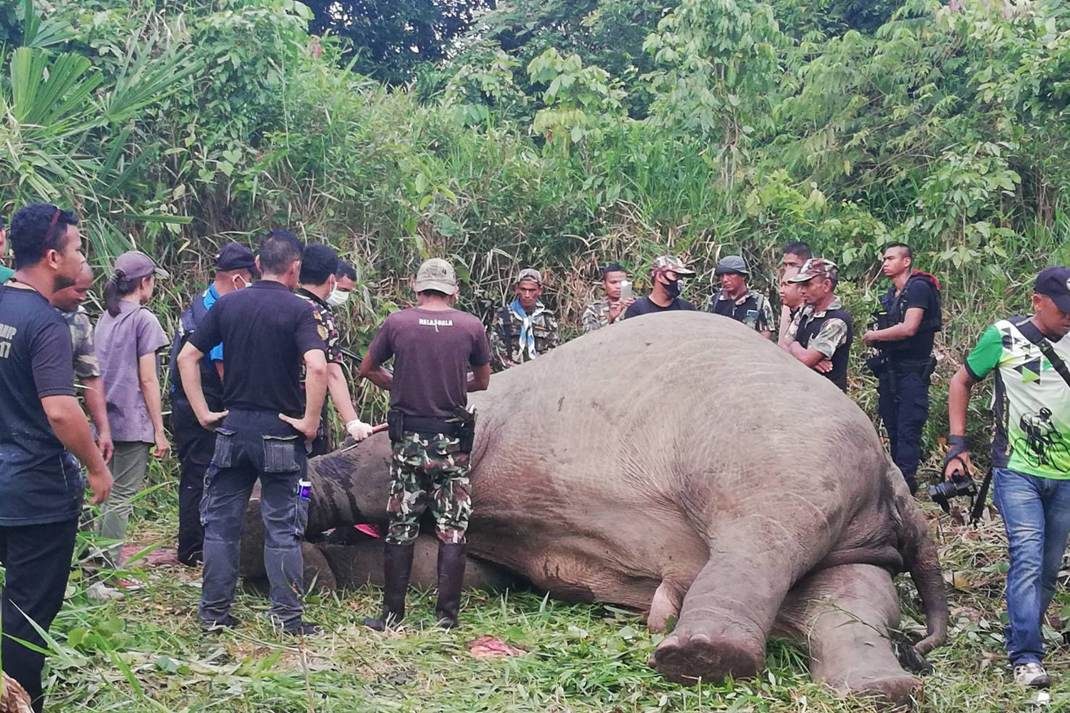 A wild elephant is found dead with tusks removed in a forest area near a rubber plantation in Rangae district, Narathiwat, on Saturday. (Photo by Waedao Harai)