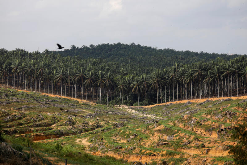 Land that has been cleared is pictured at an oil palm plantation in Johor, Malaysia Feb 26, 2019. (Reuters file photo)