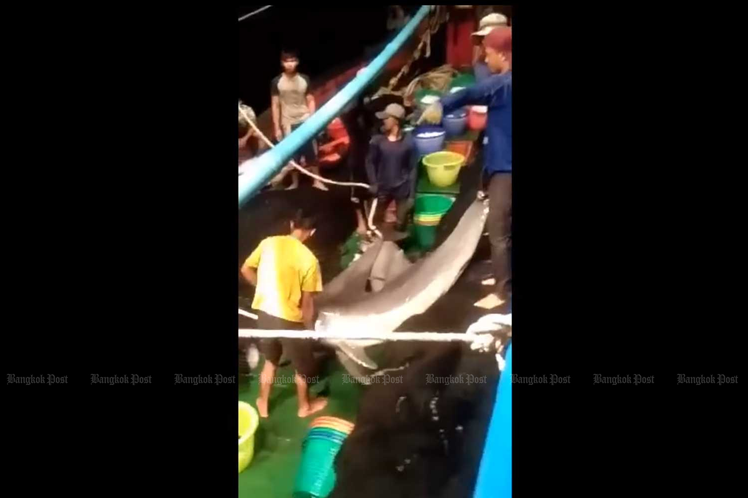 Video shows dolphins caught in fishermen's net