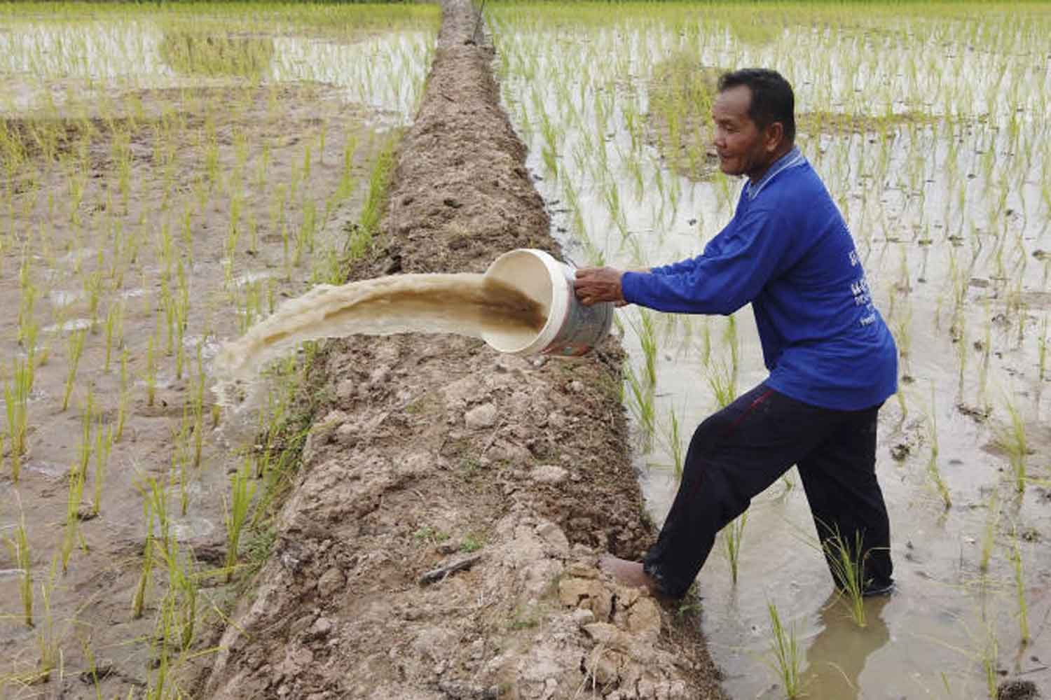 Yao Kaewsikhao tries to save a dry paddy field in Nong Kung Si district of Kalasin province. (Photo by Yongyut Phuphuangphet)