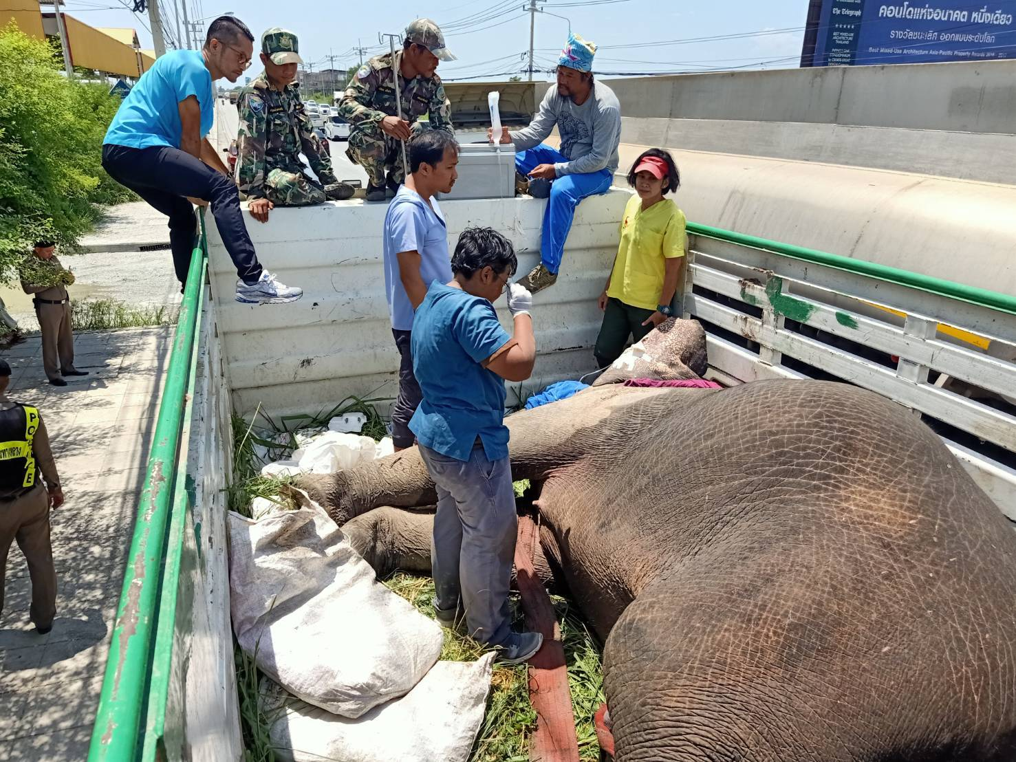 Stunned rescuers mourn the death of a critically injured elephant they were taking to a university animal hospital in Nakhon Pathom. She was hit by a trailer truck on a road in a forested area of Nong Yai district in Chon Buri early on Thursday morning. (Photo: Department of NationalParks, Wildlife and Plant Conservation)
