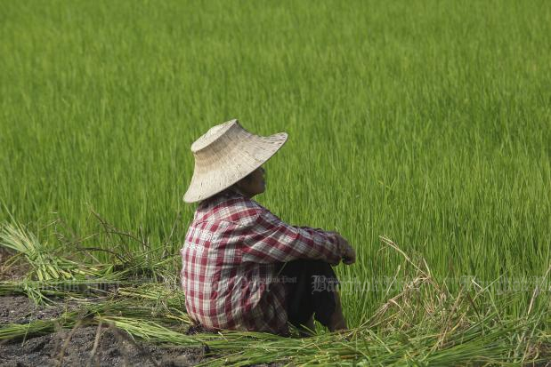 The government has endorsed the price guarantee scheme for rice worth 21 billion baht, a move to help cushion farmers from falling rice prices. (Bangkok Post photo)
