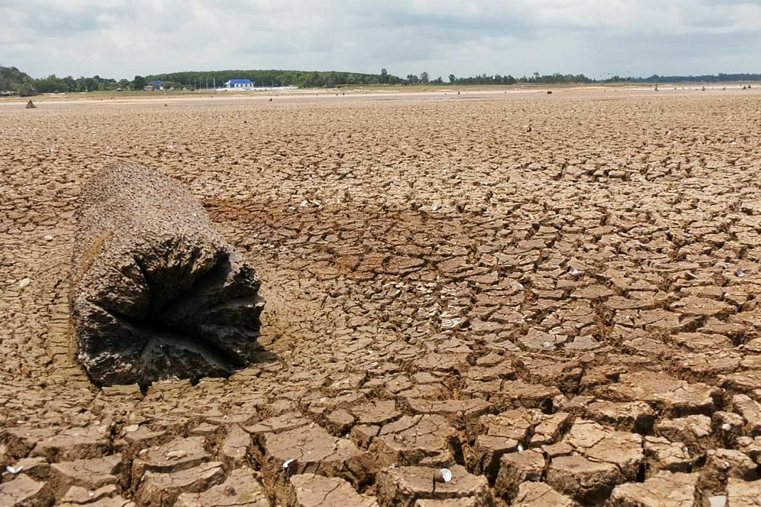 Drought has hit many areas of Surin province.  (Photo by Nopparat Kingkaew)