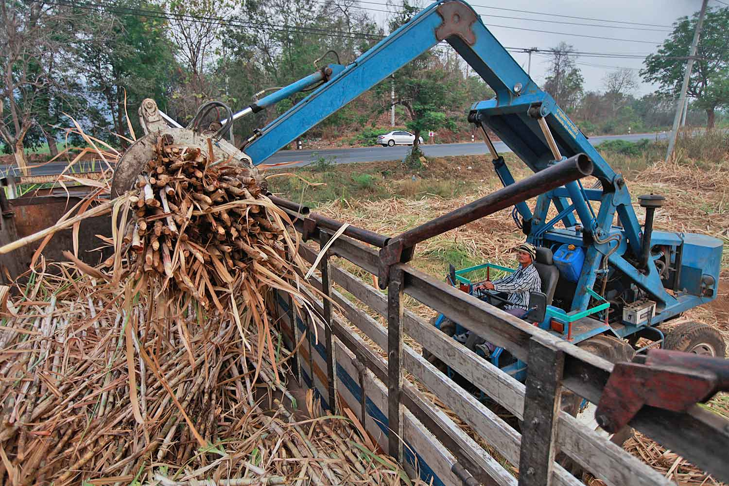 A farmer in Suphan Buri cultivating sugar cane. The Industry Ministry plans to extend the debt payment period by another 4-5 years for local farmers.(Photo by Jiraporn Kuhakan)