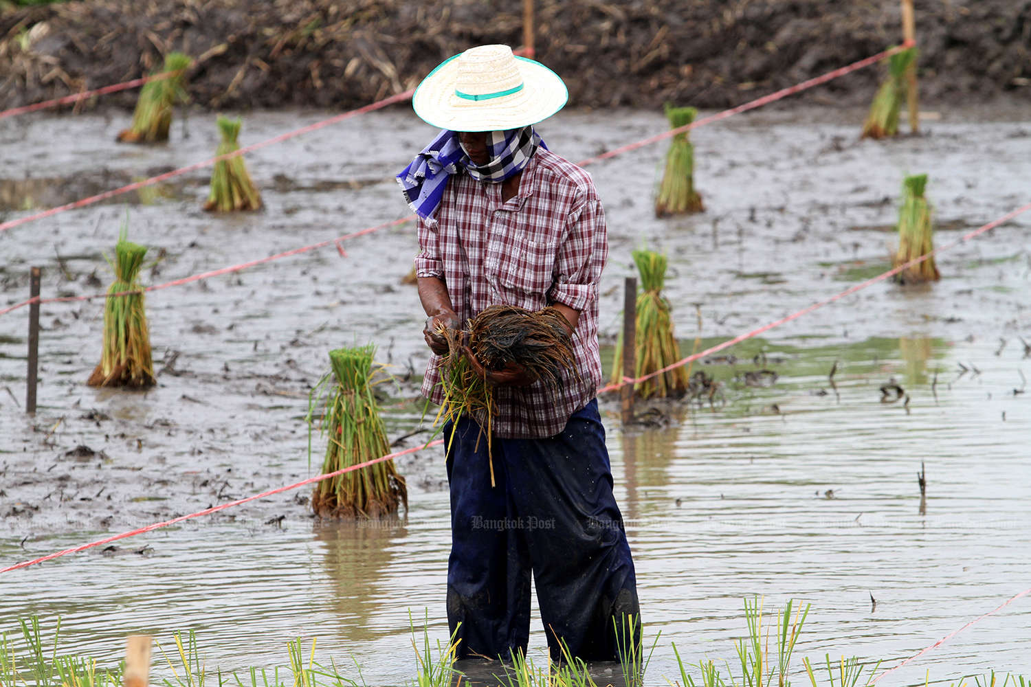 Farmers are expected to benefit from new government stimulus measures to be launched this month. (Bangkok Post photo)