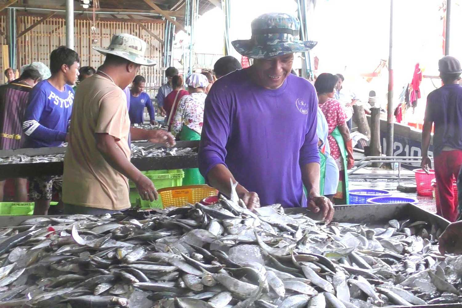 Fish on sale at a Trang fresh market. Researchers have found microplastic waste in the stomachs of mackerel caught in Trang province. (Photo by Methee Muangkaew)