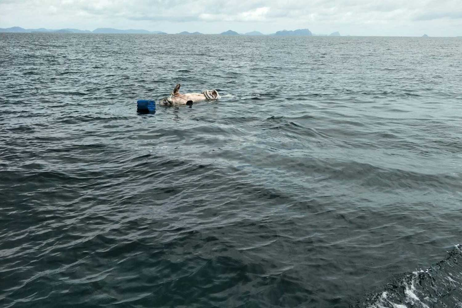 A picture taken on Saturday shows the carcass of a payoon floating in the sea between Ya island of Trang and Ngai island of Krabi.