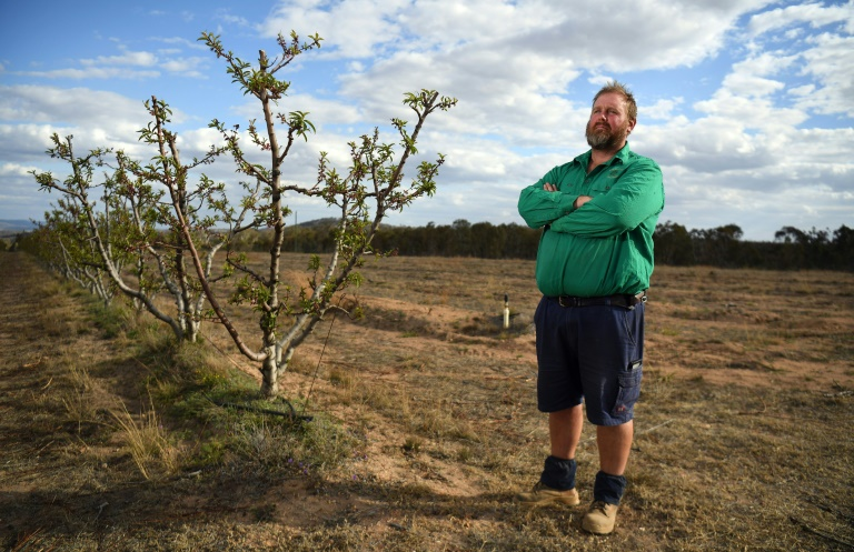 Angus Ferrier stands by his few remaining citrus trees at his drought-hit orchard Stanthorpe, regional Queensland