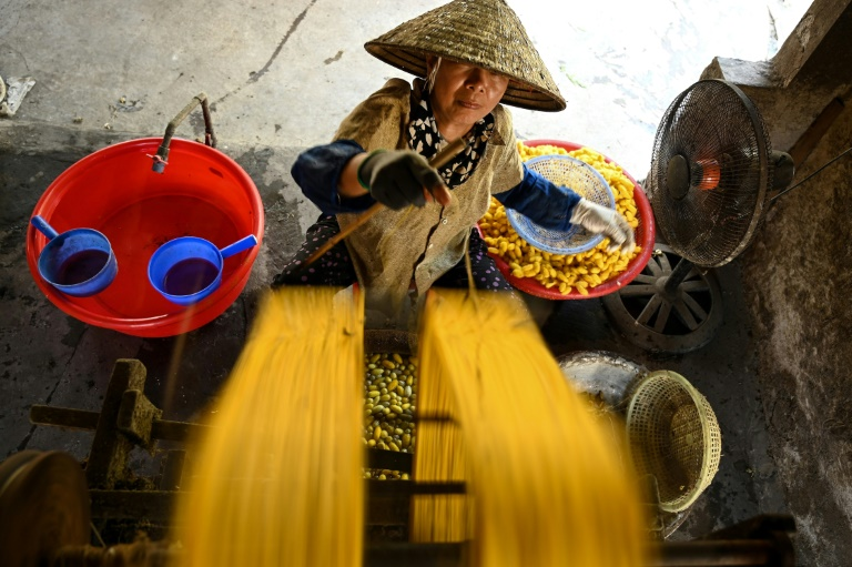 Around 30 kilogrammes of cocoons are processed every day by each silk worker in Vietnam's Co Chat village.