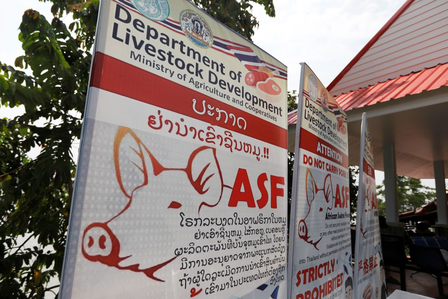 Public health banners alerting about swine fever is seen in Chiang Rai on May 16. (Reuters photo)