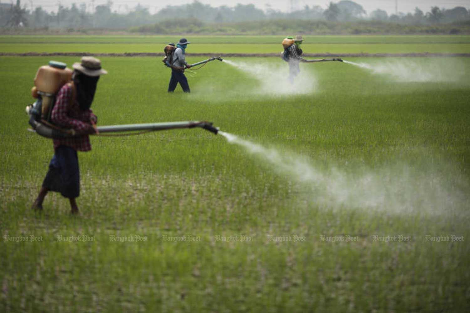 Farmers spray weedkiller in Nong Chok district of Bangkok. (File photo by Patipat Janthong)