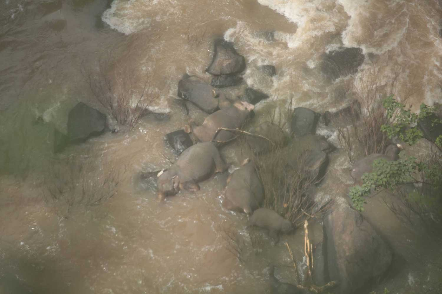 The bodies of six elephants are seen at the base of Haew Narok waterfall in Khao Yai National Park on Saturday. (Supplied photo)
